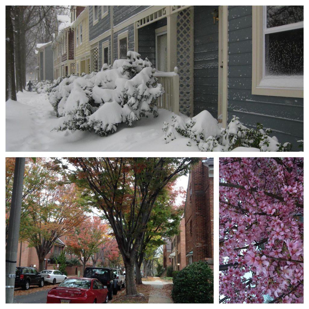 Neighborhood seasons