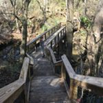 Hiking trail at Suwannee River State Park