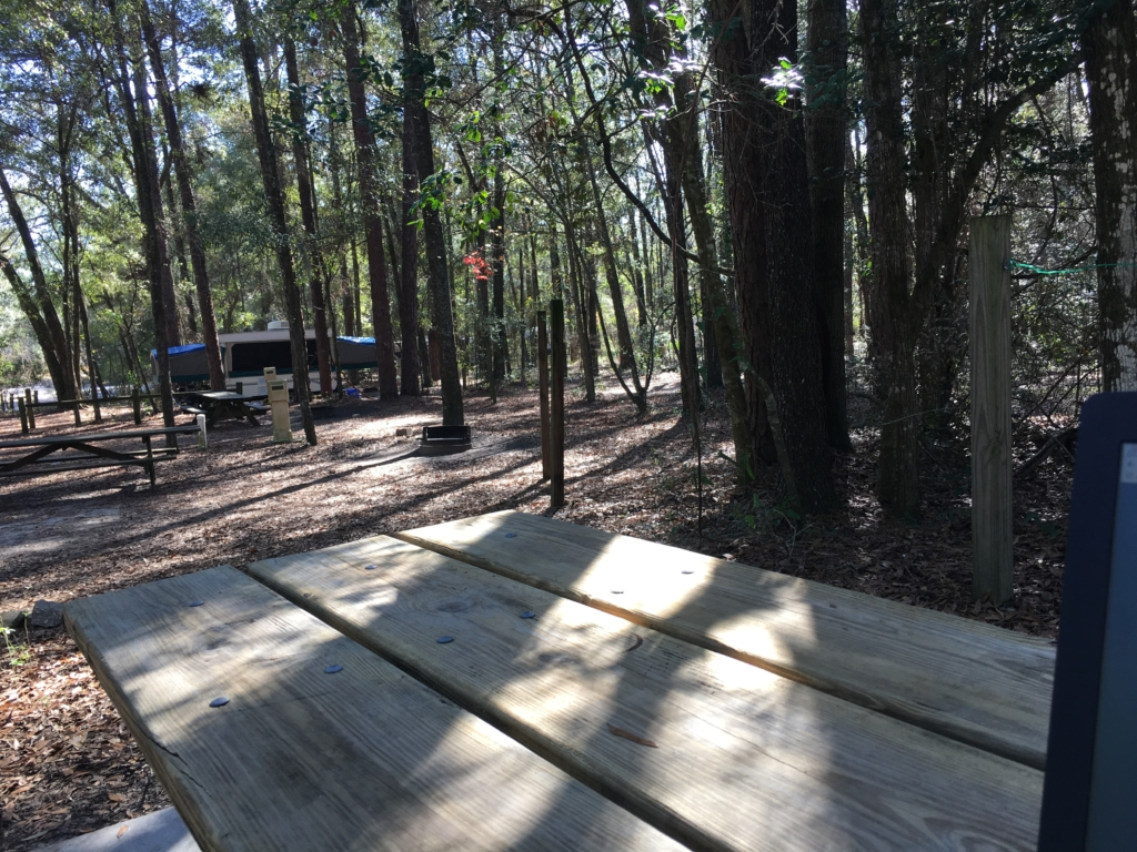 Wooded campground at Suwannee River State Park