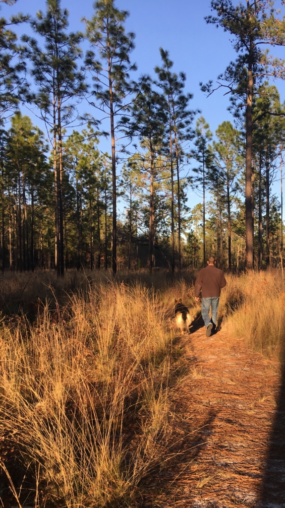 Walking trail at Suwannee River State Park