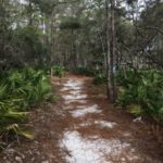 Hiking path near Grayton Beach State Park