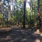 Campsite at Atlanta State Park
