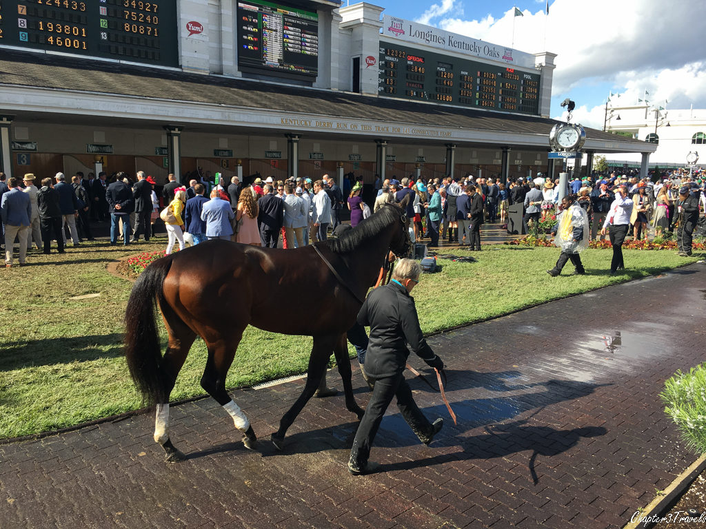 A horse walking with a trainer at Churchill Downs