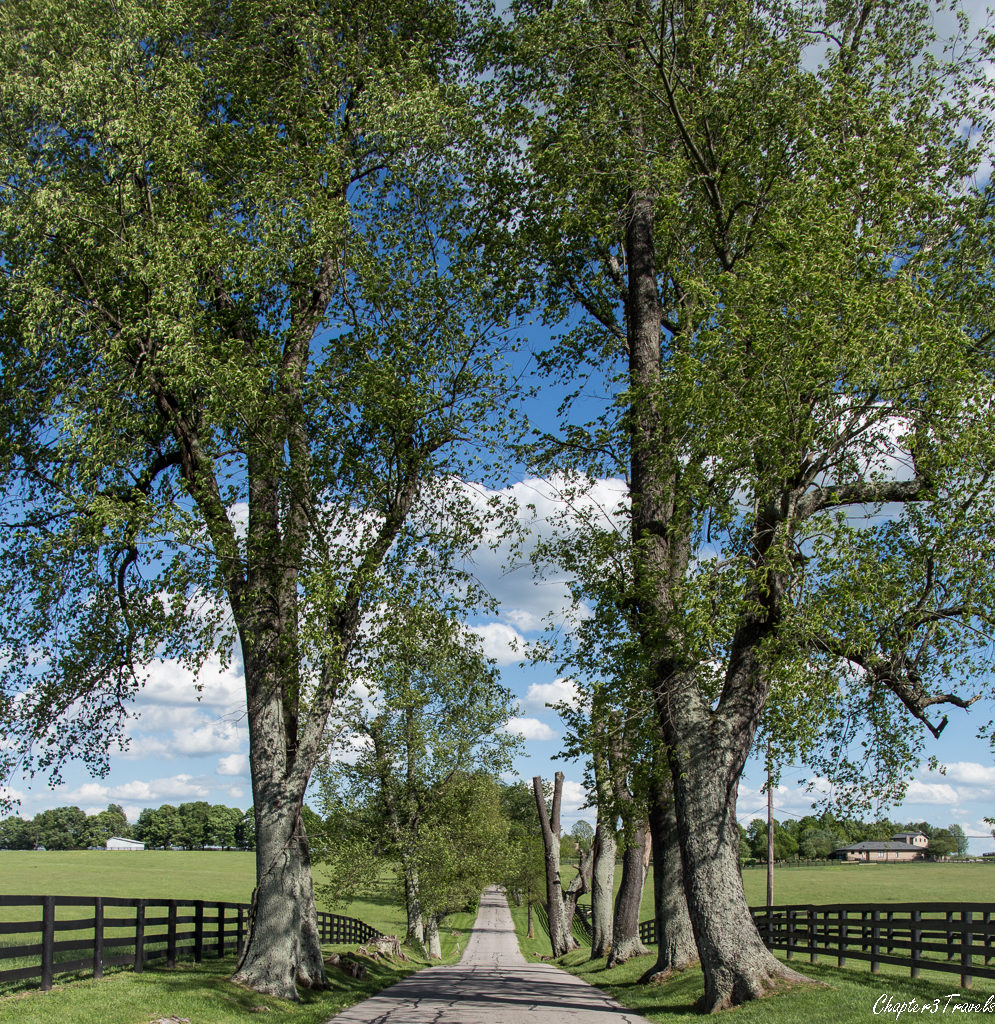 A country road in Lexington, Kentucky