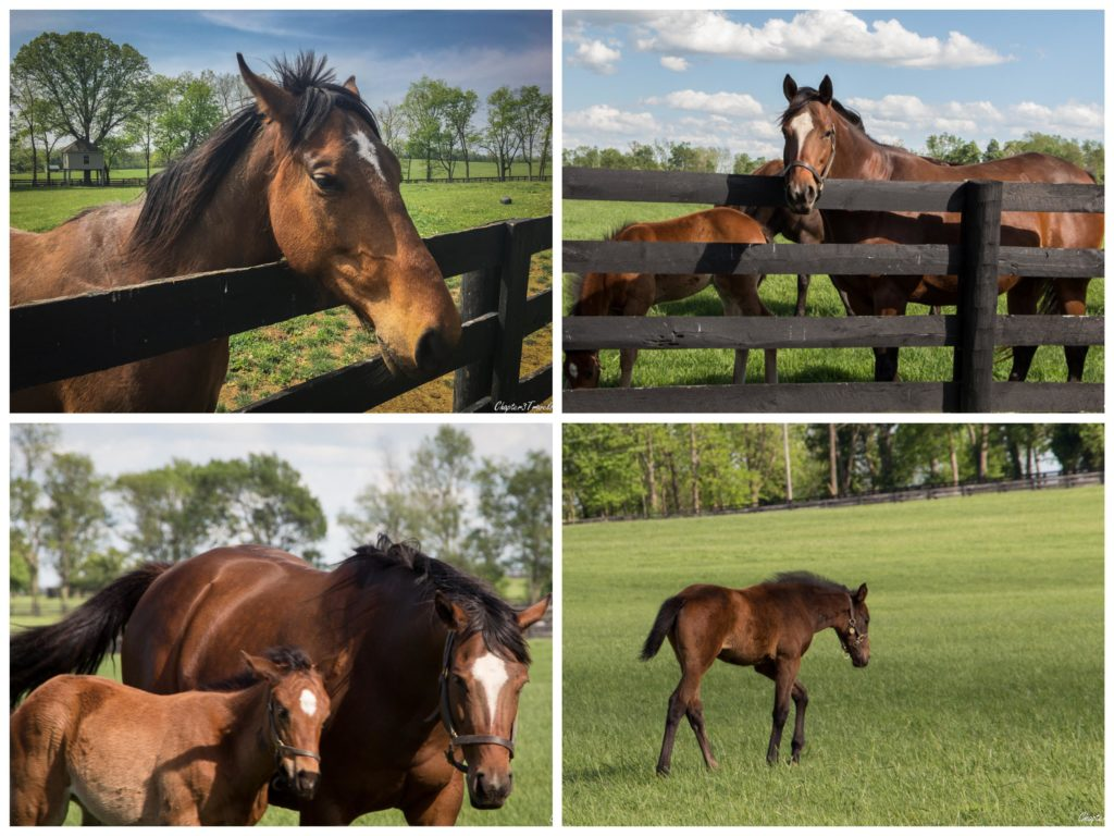 Collage of pictures of horses in Lexington, kentucky