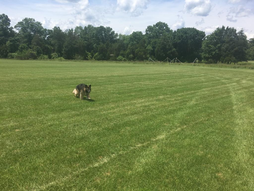 Large field at Bull Run Regional Park