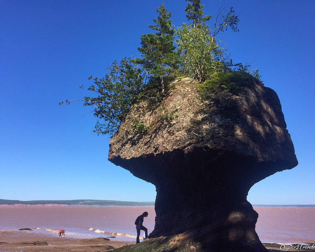 A person looking at one of the rock formations at Hopewell Rocks at low tide.