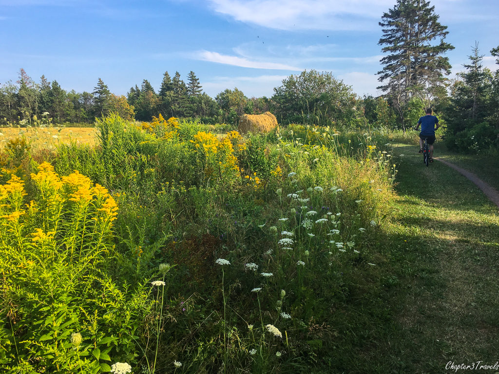 The Homestead Trail in Prince Edward Island National Park