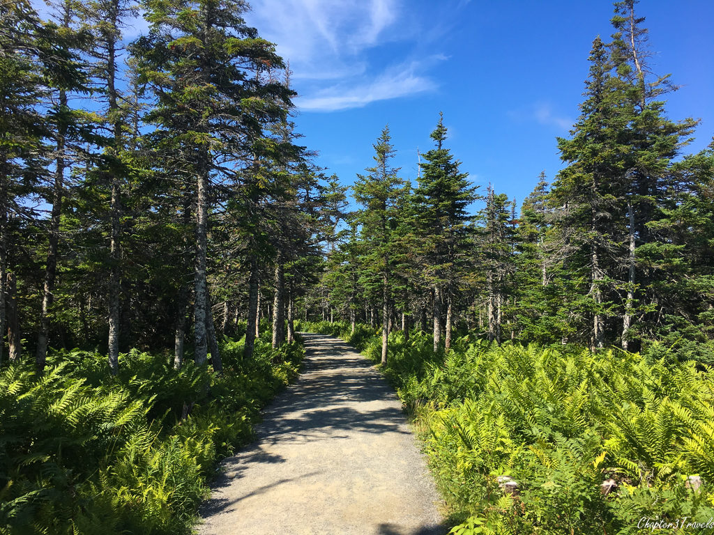 Wooded trail at Cape Breton Highlands National Park in Nova Scotia