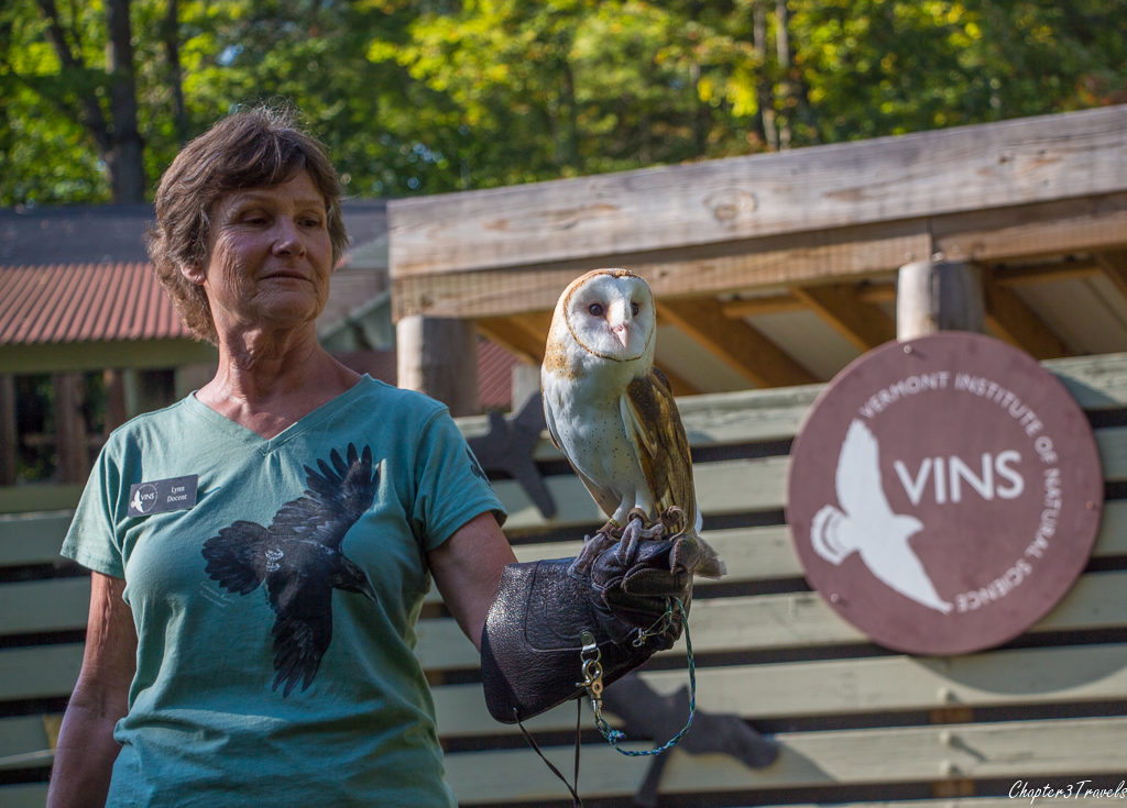 An owl at Vermont Institute of Natural Science