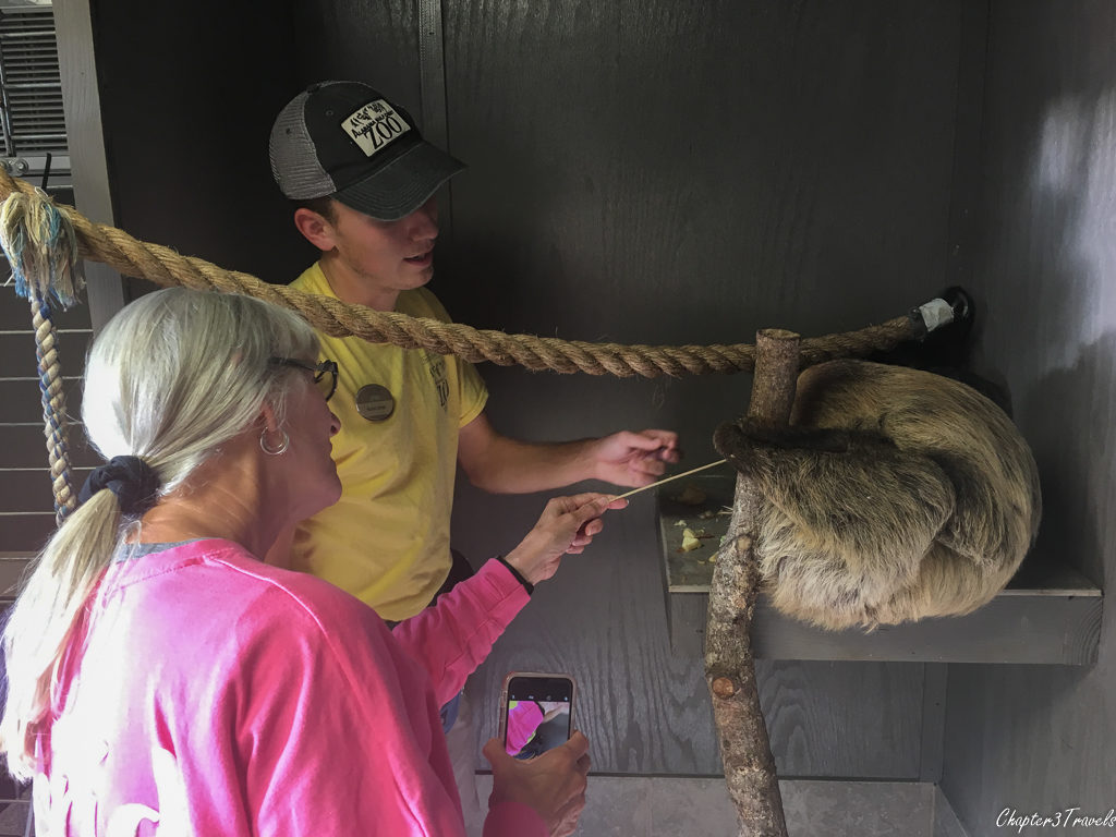 Sloth being fed at Gulf Coast Zoo in Gulf Shores, Alabama