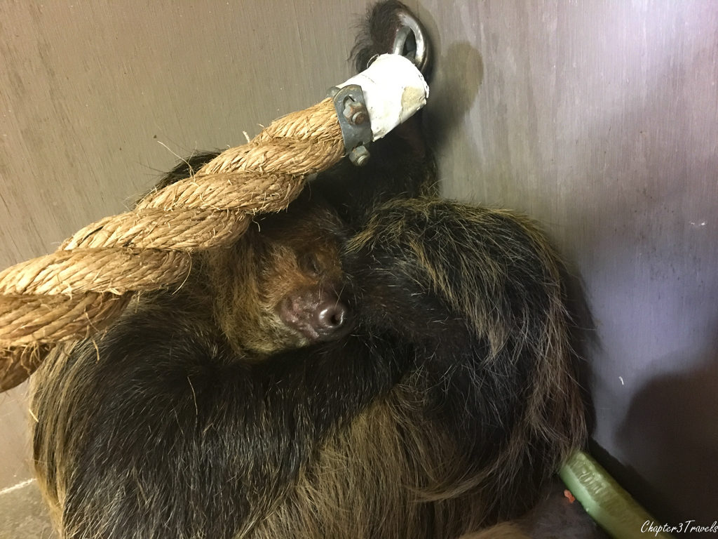 Sloth at Gulf Coast Zoo in Gulf Shores, Alabama