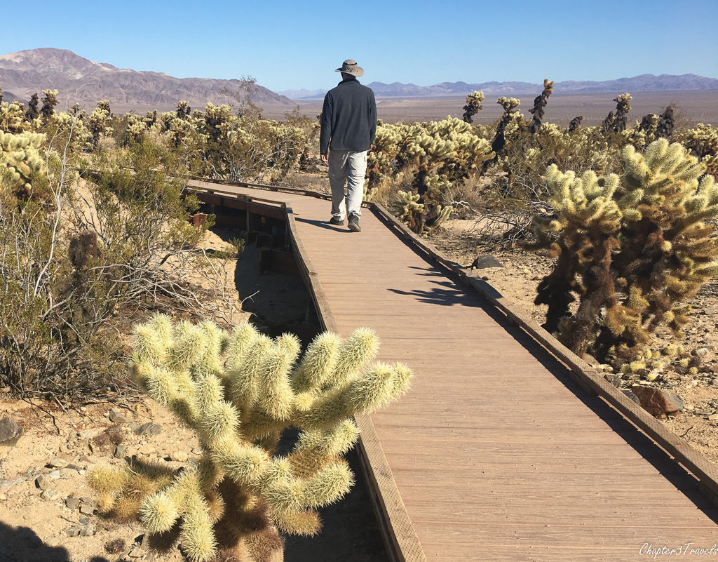 Trail through Cholla Cactus garden at Joshua Tree National Park