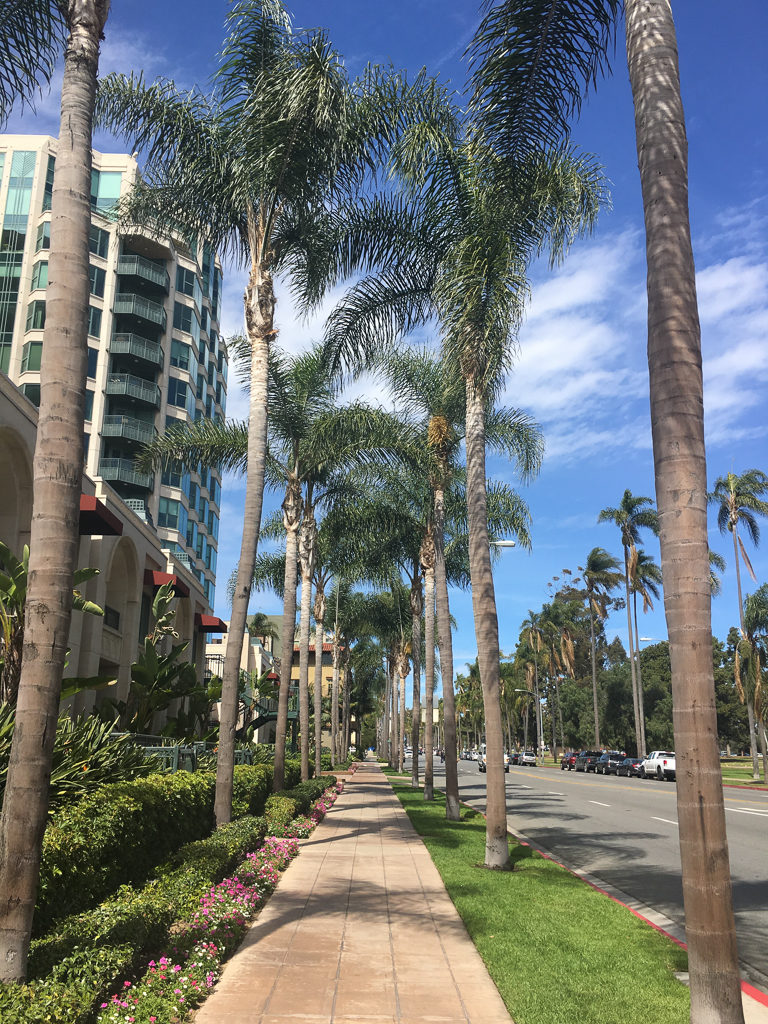 Sidewalk lined with palm trees in San Diego