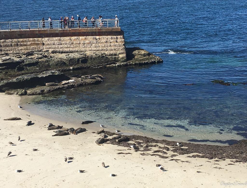 Tourists observing seals at La Jolla Cove