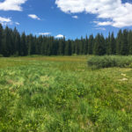 A meadow in Grand Mesa National Forest