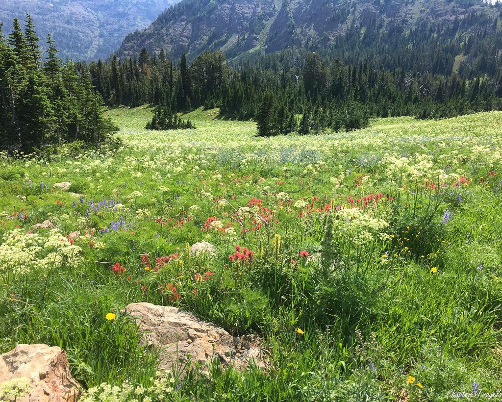 Fields of wildflowers near Island Park, Idaho
