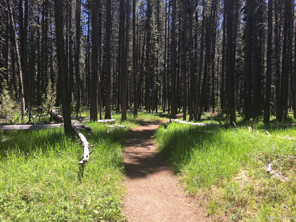 A hiking trail through a forest at Yellowstone National Park
