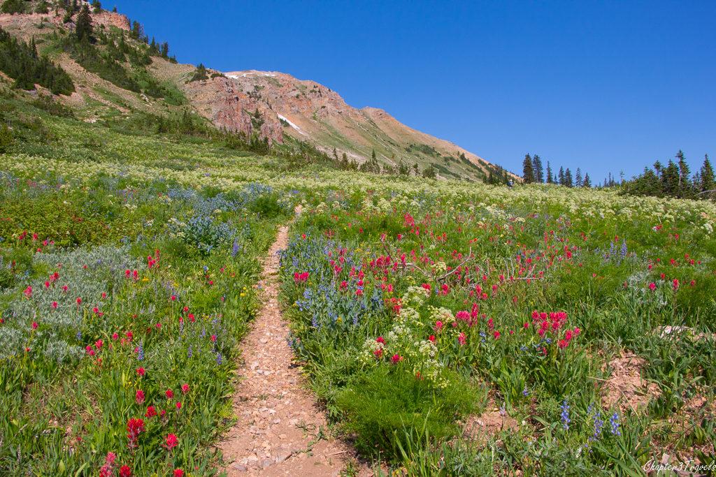 Wildflowers blanketing a meadow in Idaho