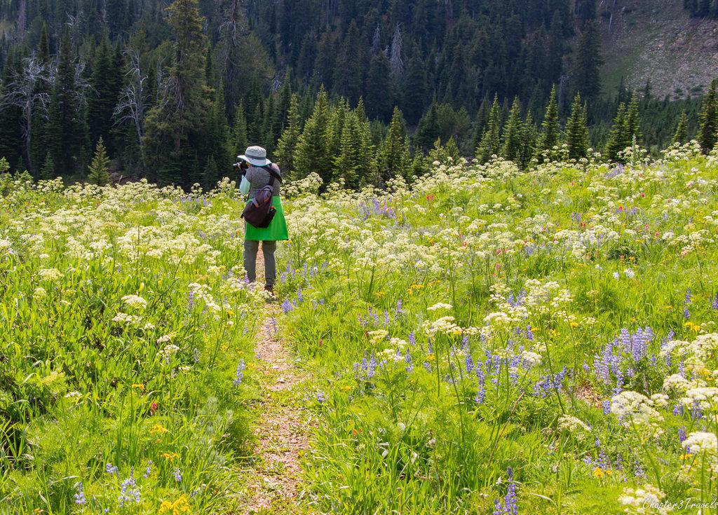 Fields of wildflowers in Idaho