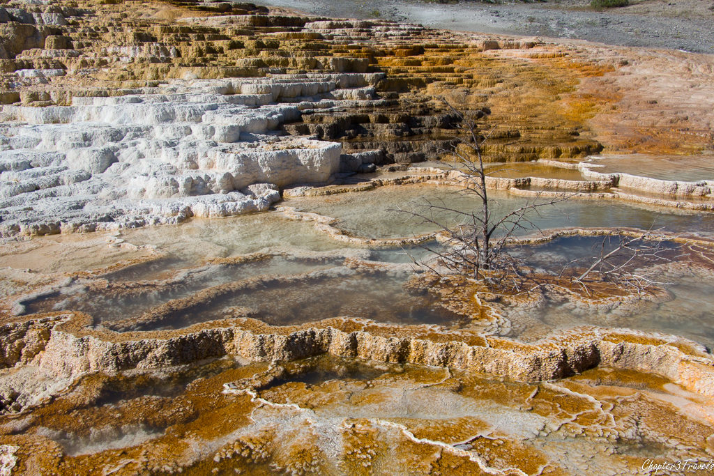 Travertine structures at Mammoth Hot Springs