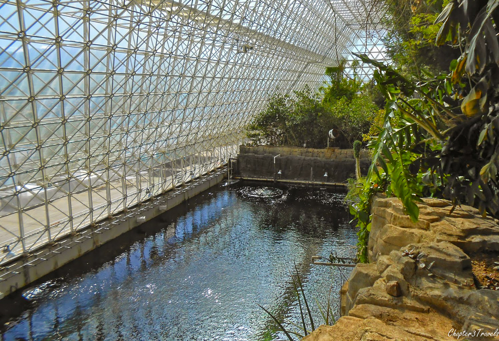 The rainforest at Biosphere II