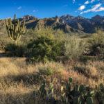 Catalina State Park, Tucson, Arizona