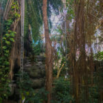 The rainforest at Biosphere II