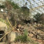 The desert at Biosphere II