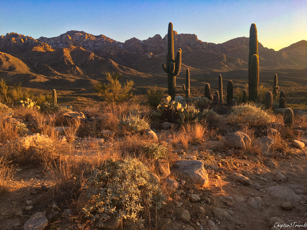The Sonoran Desert in Catalina State Park at sunset