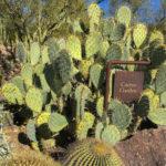 Cactus gardens at the Desert Museum