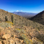 View from Wasson Peak Trail in Saguaro National Park
