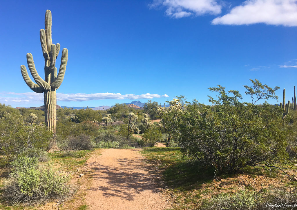 Walking trail at Lost Dutchman State Park