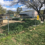 Weed covered ground and dog park at Black Canyon Campground