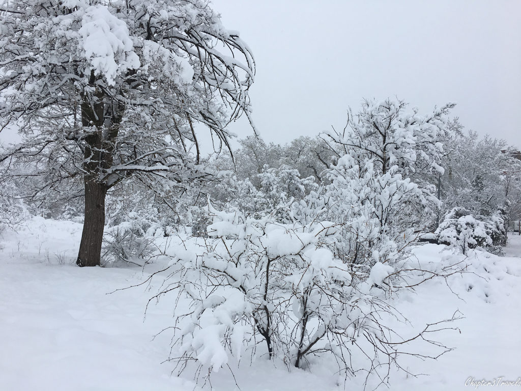 Trees and bushes under heavy snow