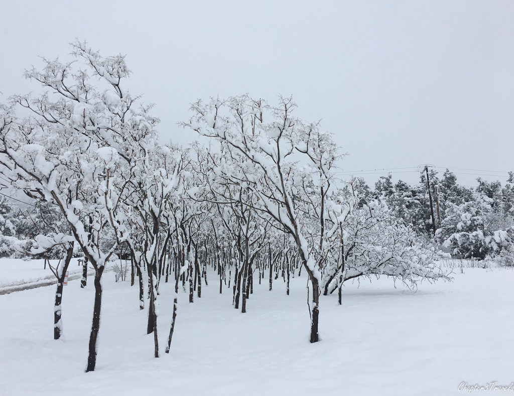 Trees coated in heavy snow