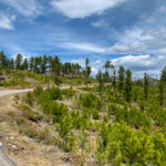 Curving road at Custer State Park