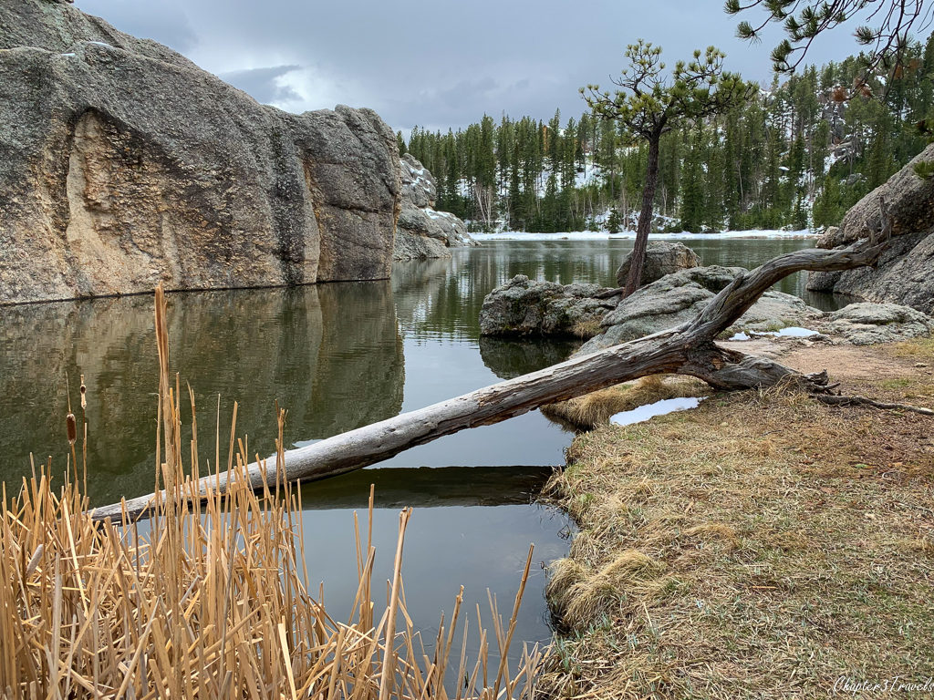 Fallen tree and rocks in Sylvan Lake at Custer State Park in South Dakota
