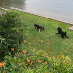 Thor and Lewis chasing each other next to the lake