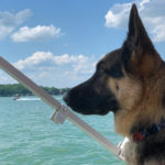 Thor looking out from the boat