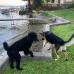 Thor and Lewis playing