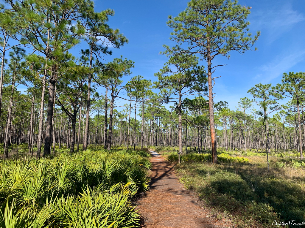 Hiking trails at Grayton Beach