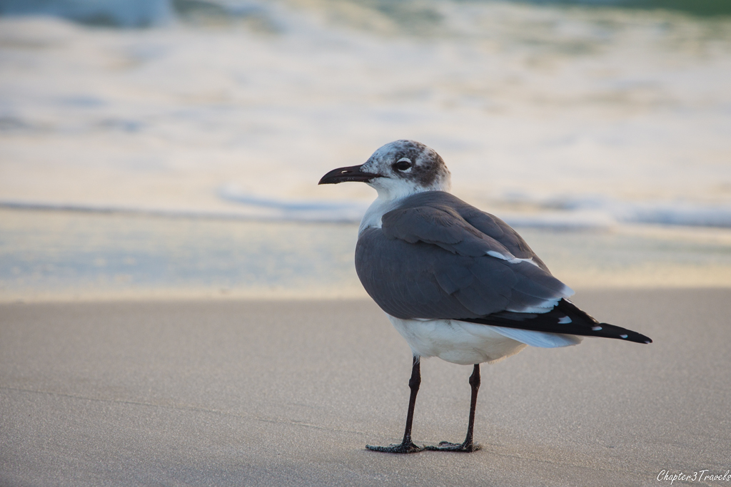 Bird on the beach at Grayton State Park