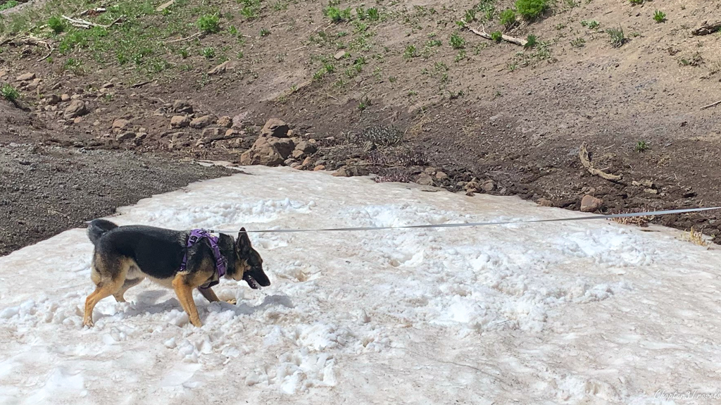 Thor standing on a snow pile