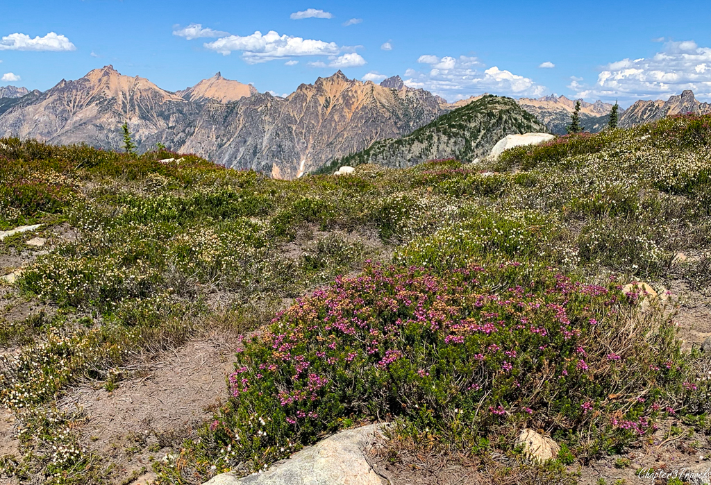 Mountain Heather on the Maple Pass Trail