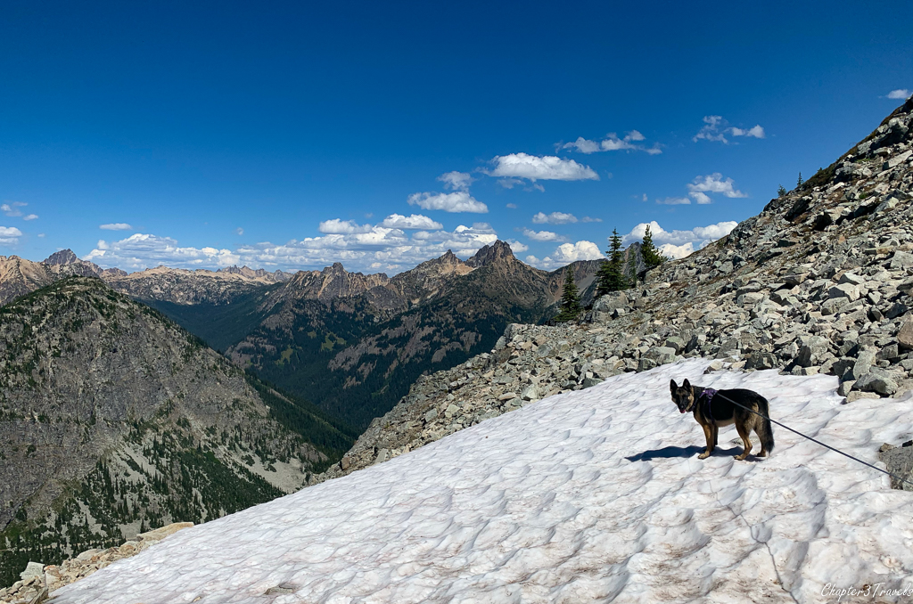 Thor on the snow in the North Cascades