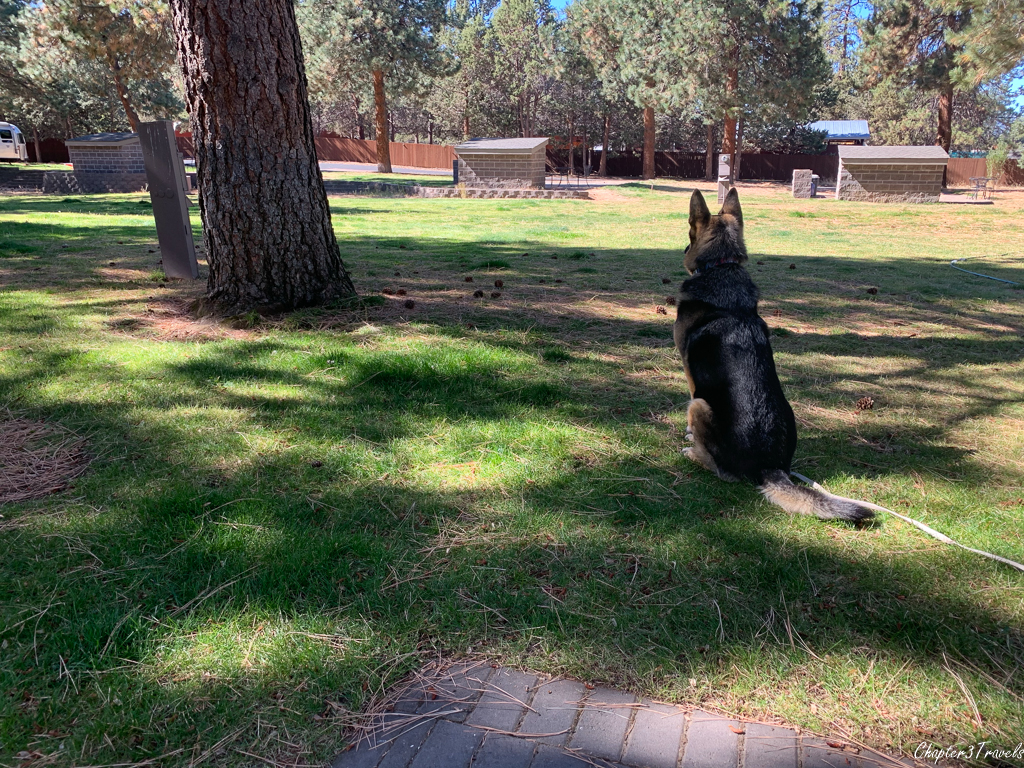 Thor looking at the lawn behind our campsite