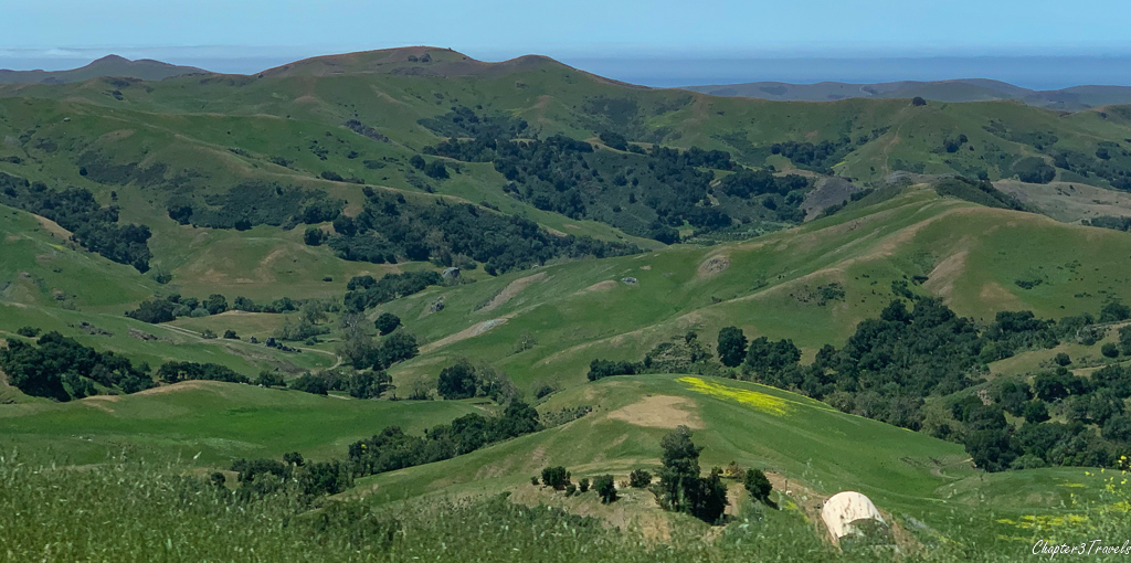 Rolling green hills dotted with trees near Paso Robles