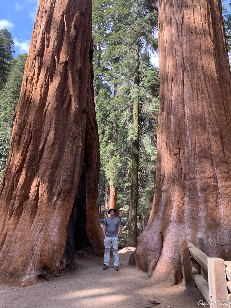 Kevin standing between two Giant Sequoia trees